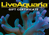 SPS Corals Gift Certificate