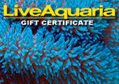 Anemone Gift Certificate