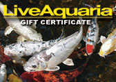 Pond Fish Gift Certificate