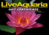 Pond Plants Gift Certificate