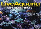 Reef Tank Gift Certificate