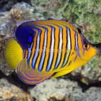 Diver's Den WYSIWYG Store