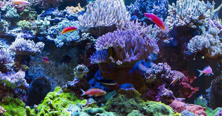 Factors That Influence Coral Coloration