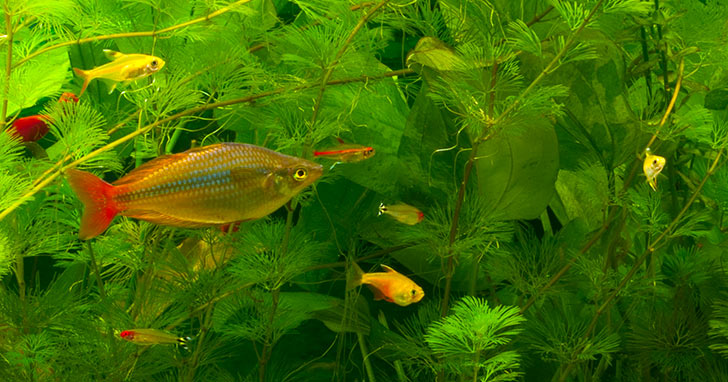 Aquarium Essentials Overview: Enjoy Success with the Right Equipment