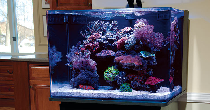 Coralife BioCube Aquarium Systems