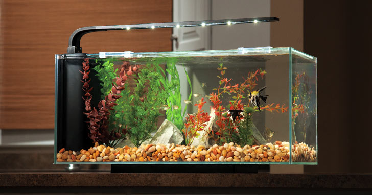 Upgrade your child's starter aquarium.