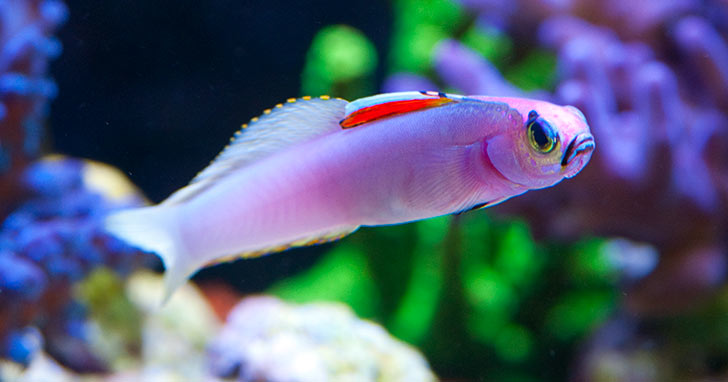 What Liveaquaria.com feeds marine fish in their Aquaculture Coral & Aquatic Life Facility