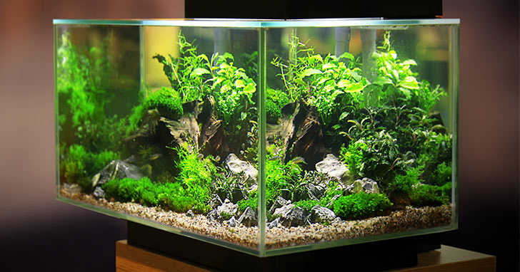 Are Live Plants for Your Aquarium?