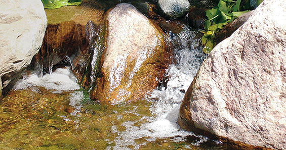 Pond algae control & maintenance