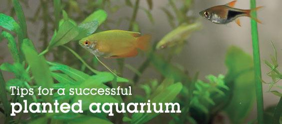 Freshwater Aquariums: Are Live Plants for Your Aquarium?