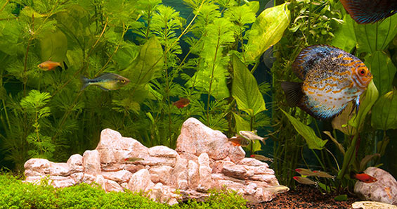 How to set up a planted aquarium for Natural fish tank