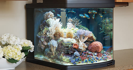 Aquarium kits an ideal solution for a first saltwater for Saltwater fish tank kit