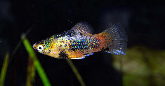 Choosing the Right Fish for your Aquarium