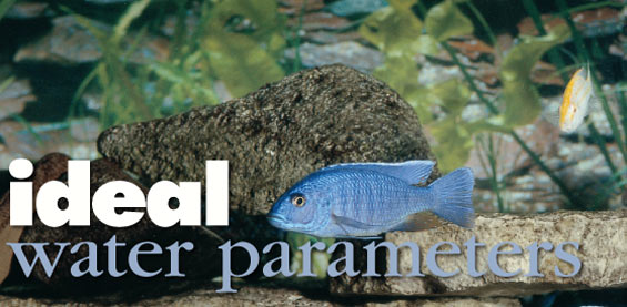Maintaining proper water quality in the home aquarium.