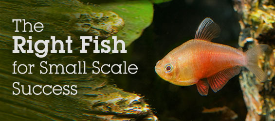The Right Fish for Small Scale Success