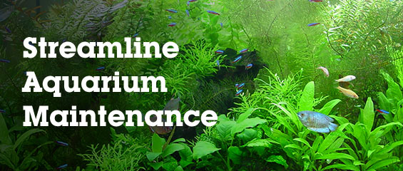 Aquarium Maintenance Tips