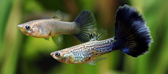 Understanding Aquarium Fish Nutrition
