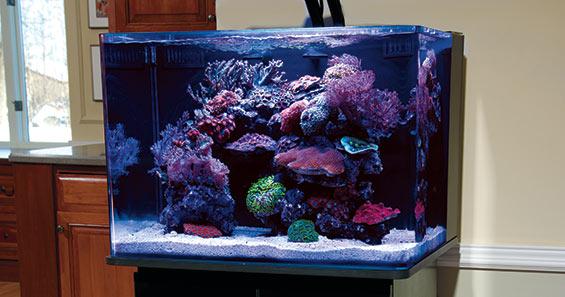 Aquascaping Nano Reef Aquariums How To Maximize Limited Aquarium Space