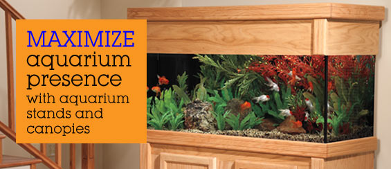 Aquarium Stands and Canopies & Aquarium Stands and Canopies: Showcase Your Aquarium with Aquarium ...