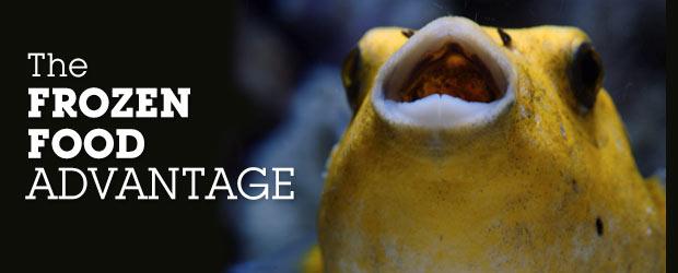 Proper aquarium fish diet improve aquarium diet with for Best frozen fish to buy at grocery store