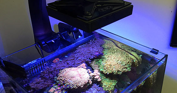 led aquarium lighting for plants