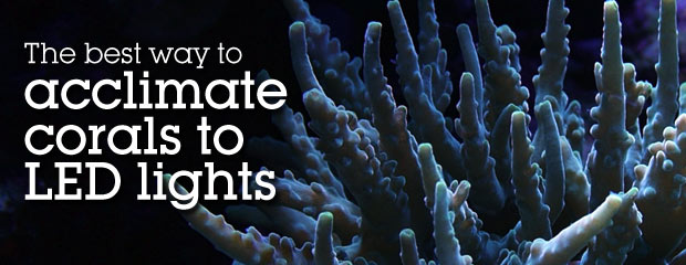 Acclimating your Corals to LED Lights