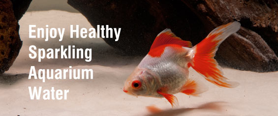 Enjoy healthy, sparkling aquarium water.
