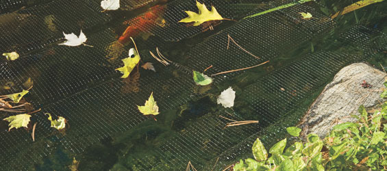 Pond Netting Seasonal Selection Guide