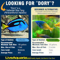 Alternative to Dory