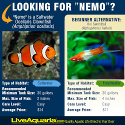 Alternative to Nemo