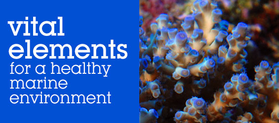 Supplements for Saltwater Aquariums