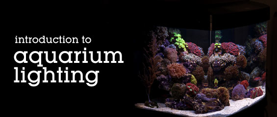 choosing lighting. choosing the proper lighting for your aquarium