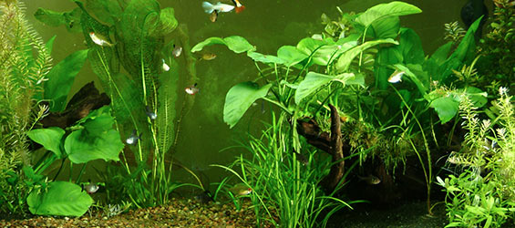 freshwater planted aquariums co2 systems for planted. Black Bedroom Furniture Sets. Home Design Ideas