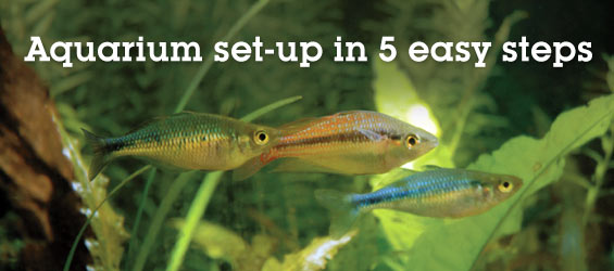 Aquarium set up freshwater aquariums easy to set up easy for Good community fish