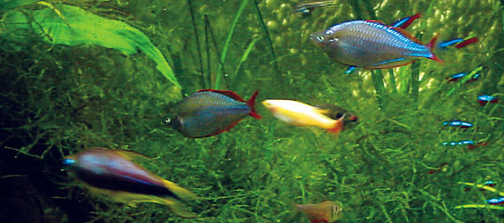 The Cycle Of Life The Nitrogen Cycle In Aquariums