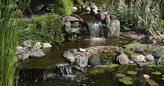 How to build a backyard wildlife habitat - Build pond wildlife haven ...
