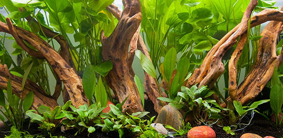 Controlling Algae Growth in the Aquarium