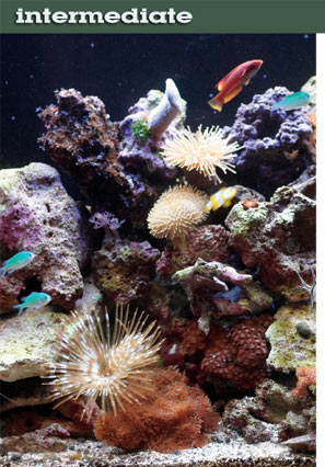 Step-by-Step Guide to Creating a Reef Aquarium