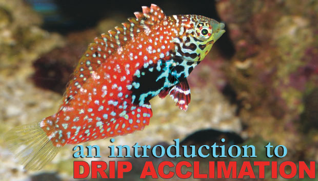 Drip Acclimation