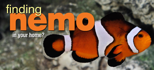 Clownfish Care: Finding Nemo...In Your Home?