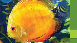 Fungal Infections in Fish