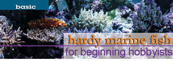 Hardy beginner fish for saltwater aquarium hobbyists for Starting a fish tank for beginners