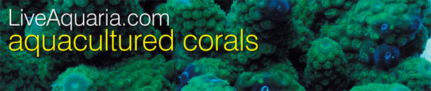 About our Aquacultured Corals