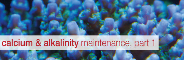 An Overview of Calcium & Alkalinity Maintenance: Part 1