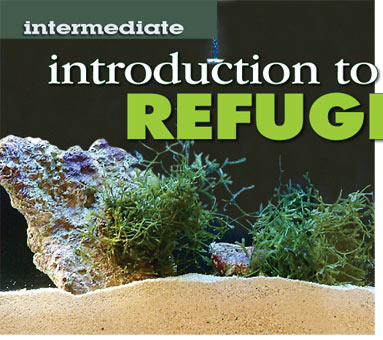 Introduction to Refugiums