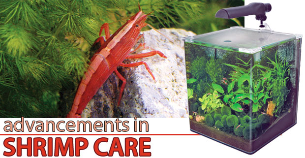 Aquarium Products for Successful Shrimp Care
