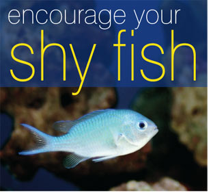 How to bring shy fish out from the rockwork for Large peaceful community fish