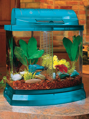 Small Aquariums: The Perfect Gift to Beautify the Home or Office