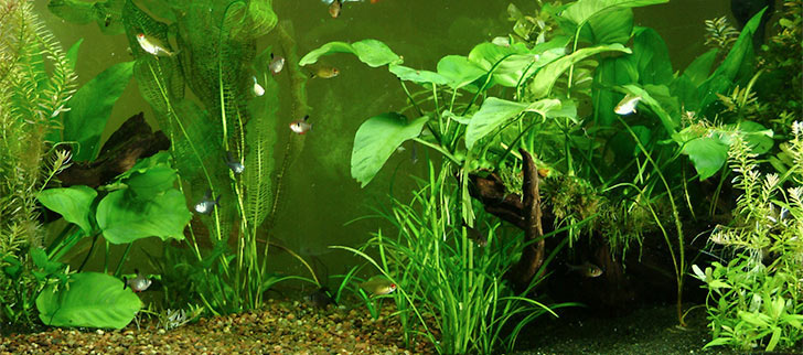 Tips for a Successful Freshwater Planted Aquarium