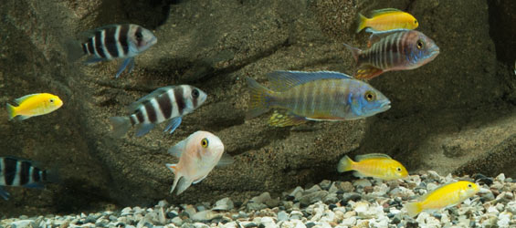 Who's minding the aquarium? Aquarium basics for your aquarium caretaker
